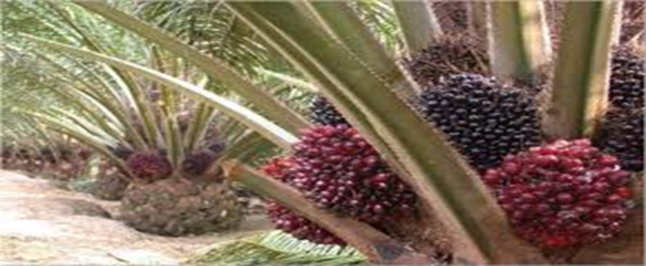 Plantation Management System